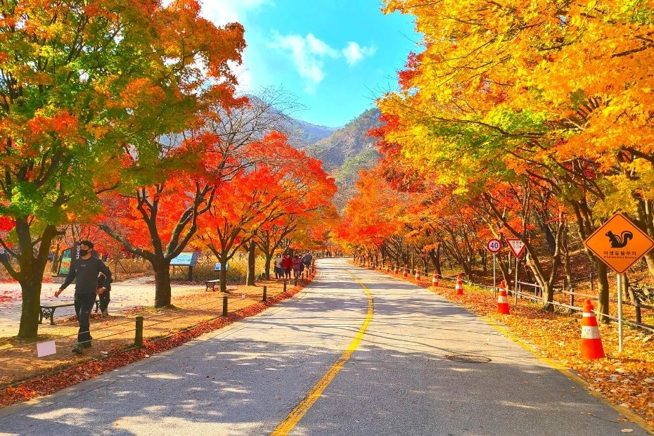 Autumn leaves in Naejangsan National Park, Korea