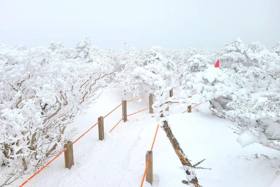 Snow on Hallasan Mountain on Jeju Island in winter