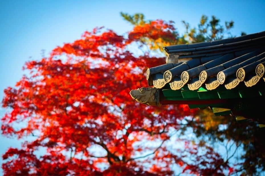 Autumn leaves in Korea