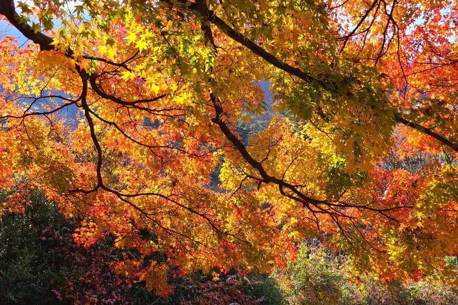 Fall foliage at Naejangsan National Park