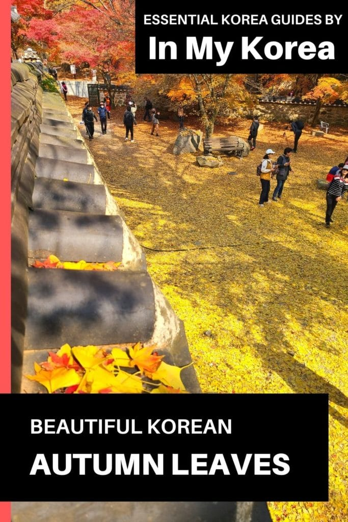 Beautiful Korean autumn leaves pictures Pin 1
