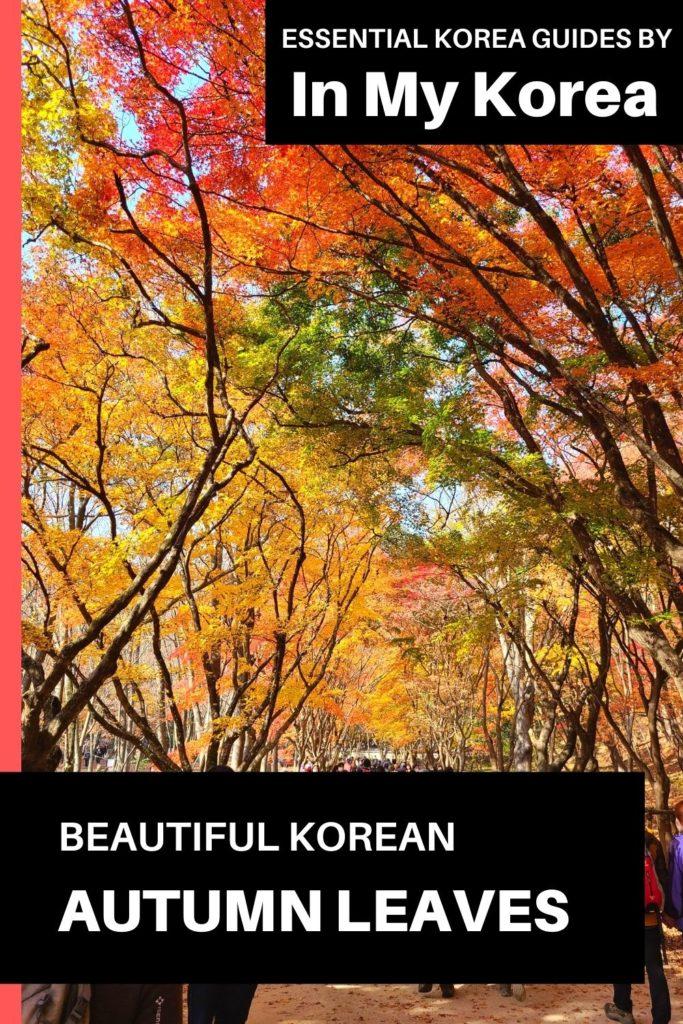 Beautiful Korean autumn leaves pictures Pin 2