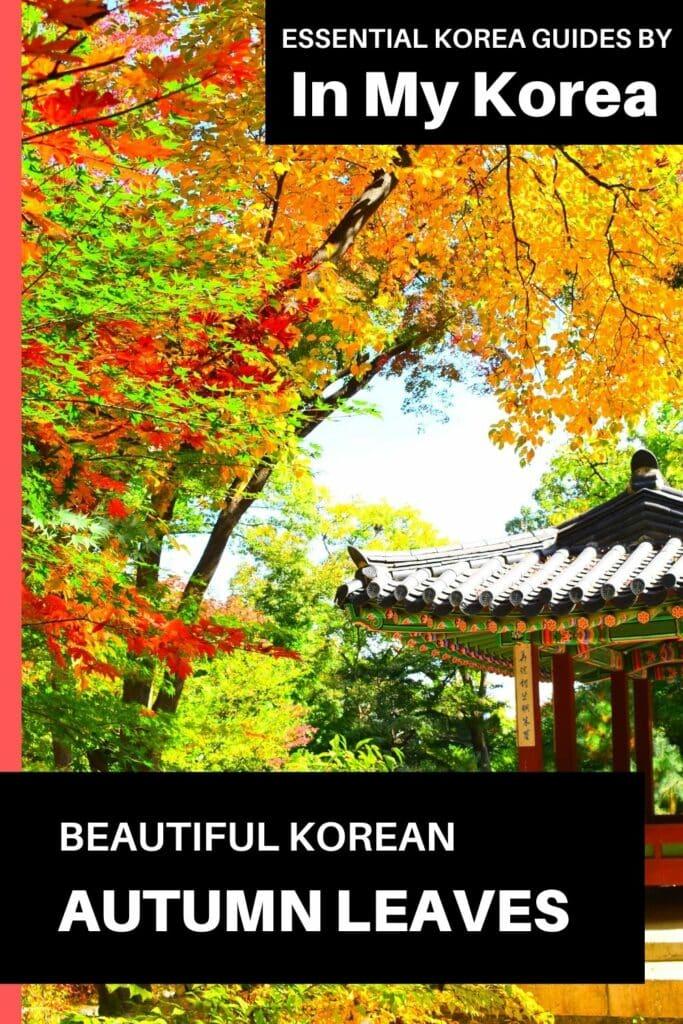 Beautiful Korean autumn leaves pictures Pin 3