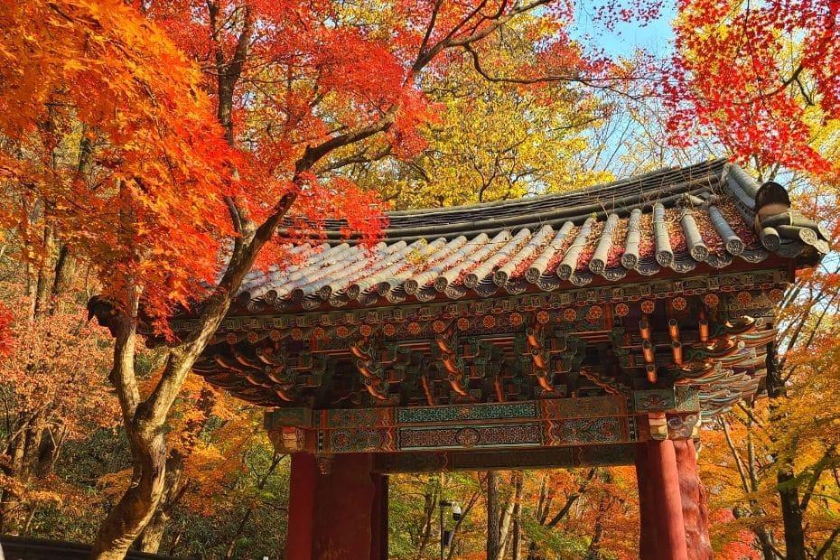 Beautiful Autumn Leaves Pictures Korean Temple Gate