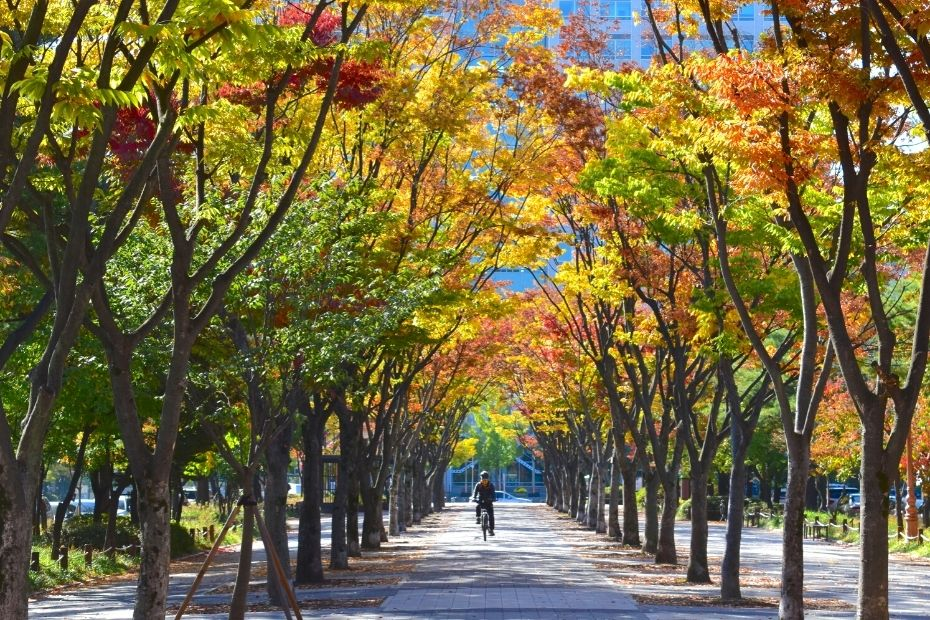 Tree lined street in Daejeon, Korea