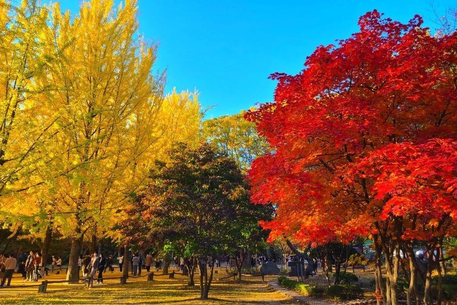 Colourful trees at Nami Island, Korea