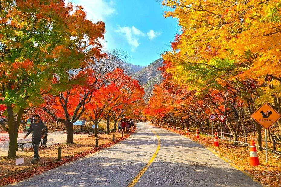 Korean Autumn Leaves Pictures from Naejangsan National Park