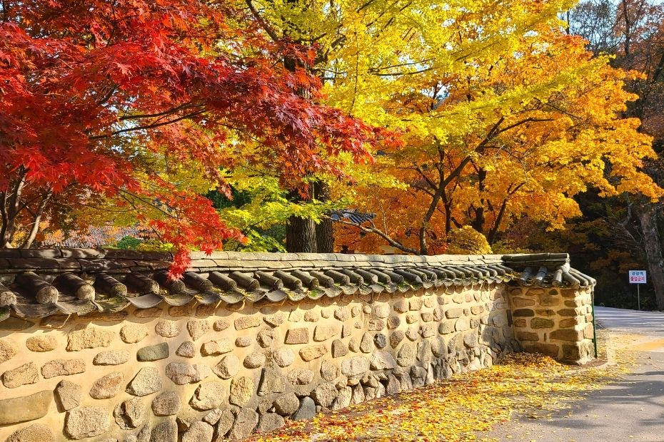 Temple wall covered with autumn leaves at Songnisan National Park, Korea