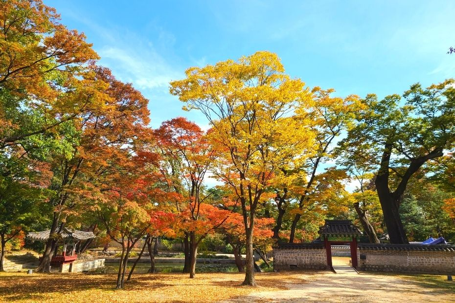 Autumn leaves at the Secret Garden in Changdeokgung Palace