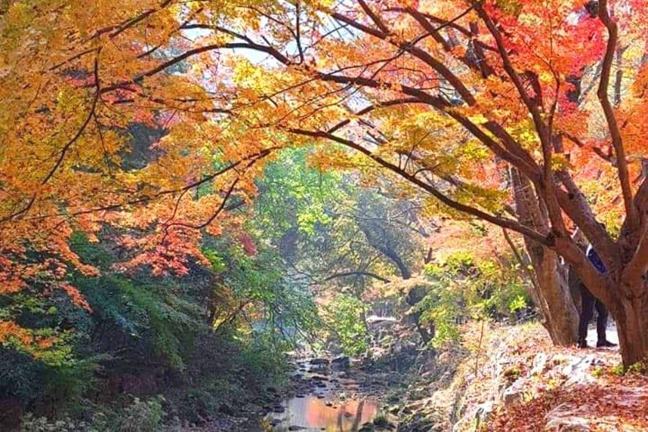 Stream at Gangcheonsan Mountain, Sunchang