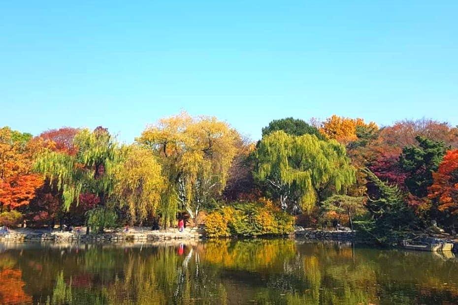 Changgyeonggung Palace Autumn Leaves, Seoul
