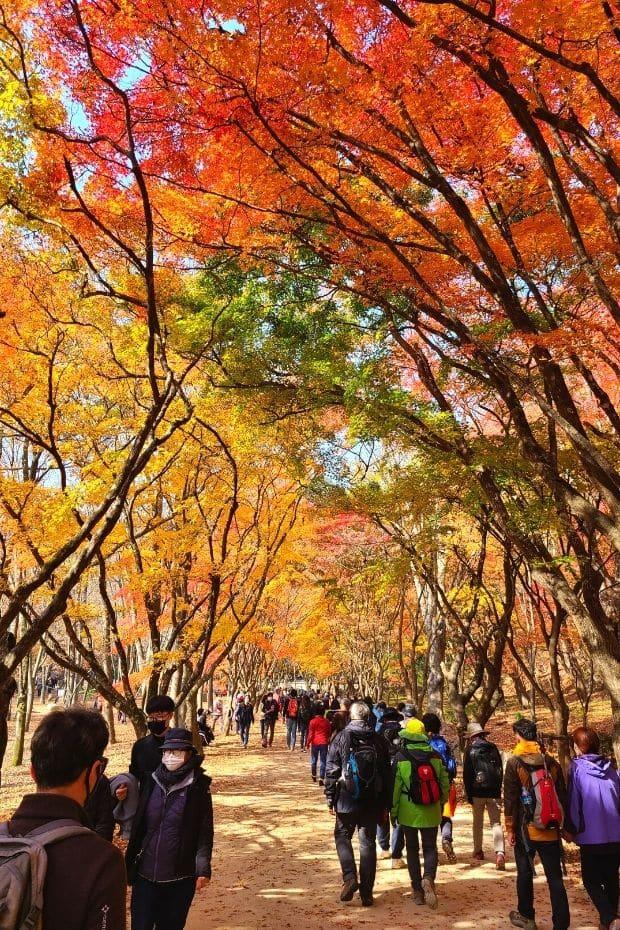 Crowds of people at Gangcheonsan Mountain, Sunchang