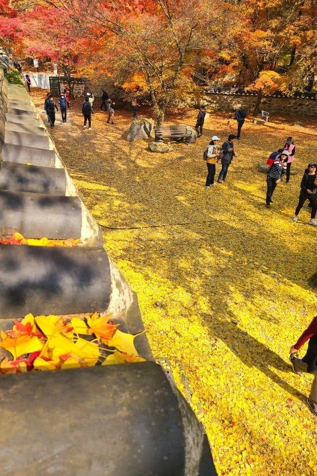 Autumn Leaves at Naejangsa Temple at Naejangsan National Park