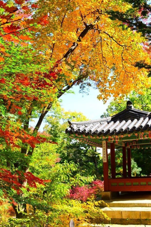 Inside the Secret Garden at Changdeokgung Palace, Seoul