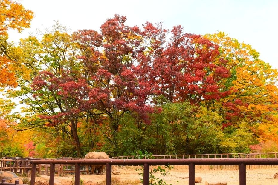 Seoul Zoo at Seoul Grand Park during autumn