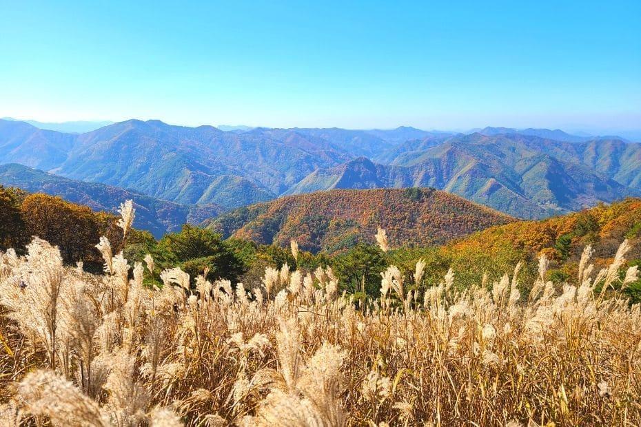 Reeds and autumn leaves at Mindungsan Mountain, Korea