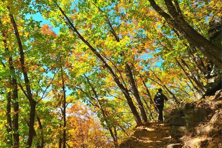 Hiking path at Mindungsan Mountain, Korea