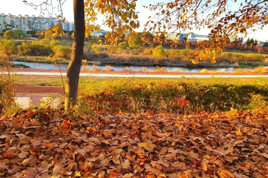 Autumn leaves in Daejeon, Korea