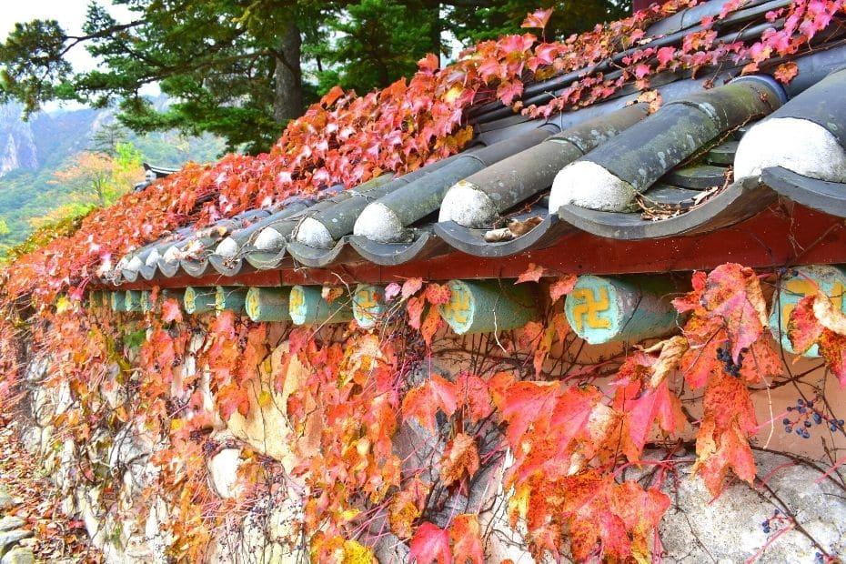 Leaf covered wall at Seoraksan National Park