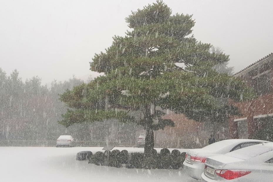 Snowy car park in November in Korea