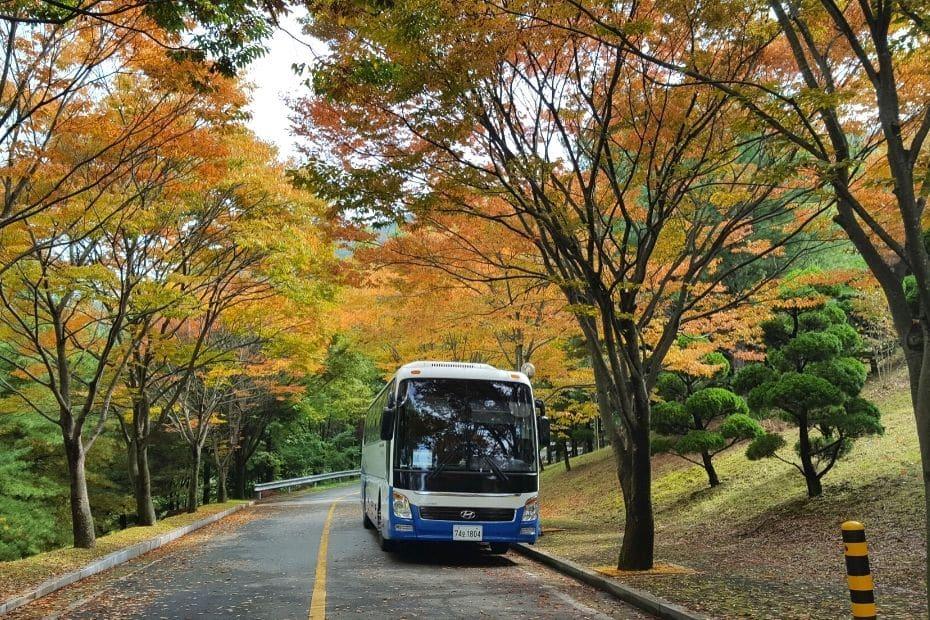 Tour Bus In Korea